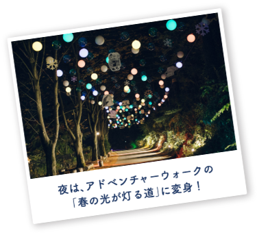 """At night, transform into the """"Road of Spring Lights"""" on the Adventure Walk!"""